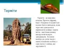 Терміти  Терміти - це невеликі комахи. Проте в Африці, Індії і Південно-Схі...