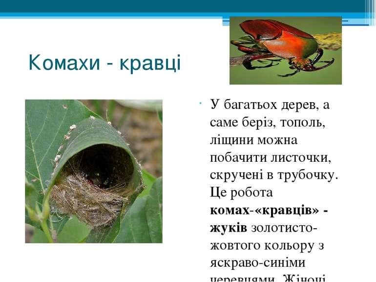 Комахи - кравці У багатьох дерев, а саме беріз, тополь, ліщини можна побачити...