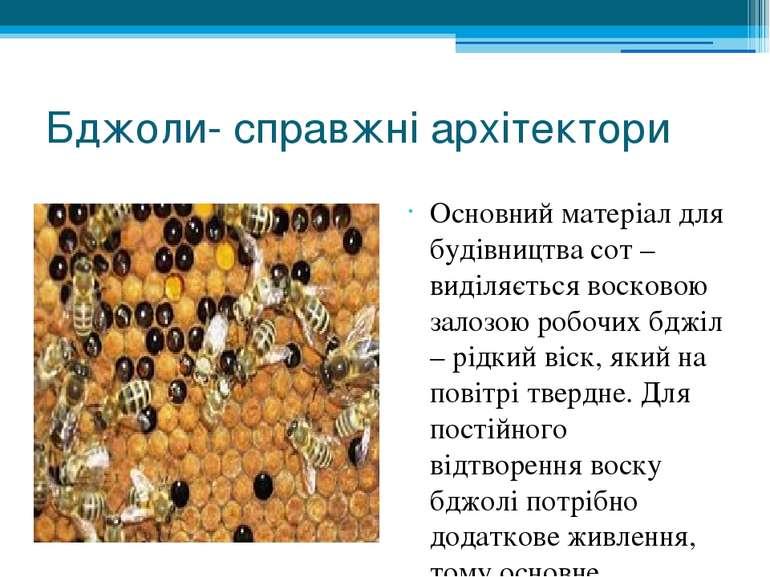 Бджоли- справжні архітектори Основний матеріал для будівництва сот – виділяєт...