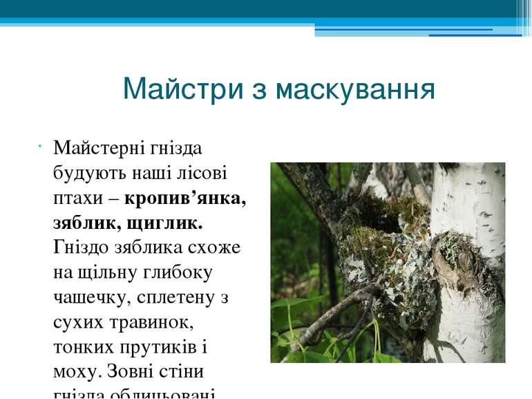 Майстри з маскування Майстерні гнізда будують наші лісові птахи – кропив'янка...