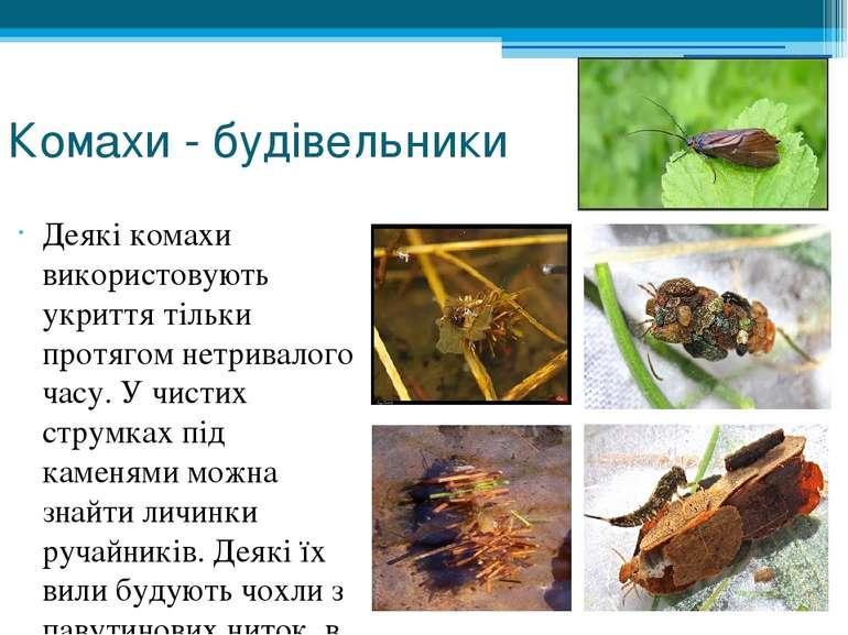 Комахи - будівельники Деякі комахи використовують укриття тільки протягом нет...