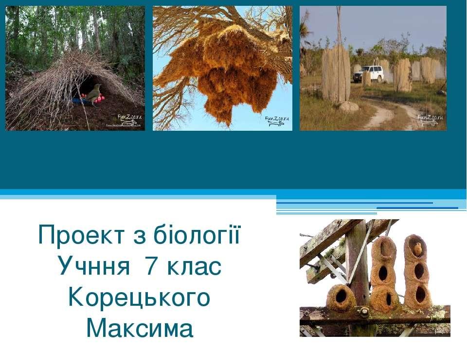 Тварини-будівельники Проект з біології Учння 7 клас Корецького Максима
