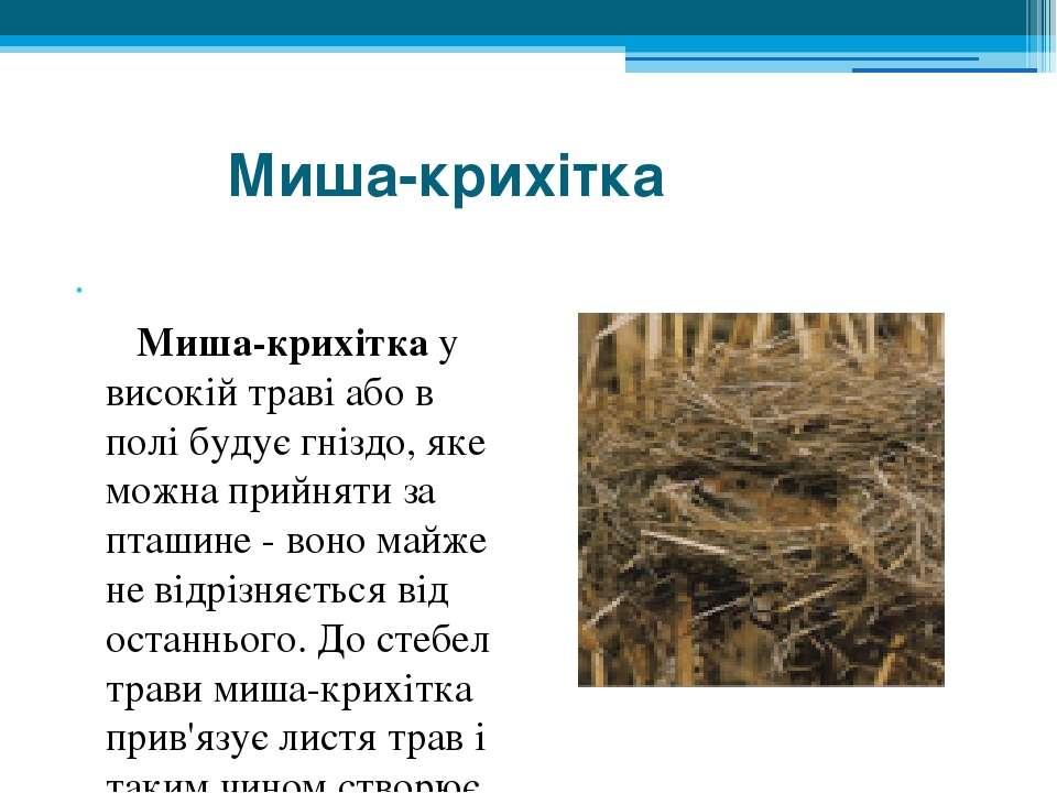 Миша-крихітка  Миша-крихітка у високій траві або в полі будує гніздо, яке м...