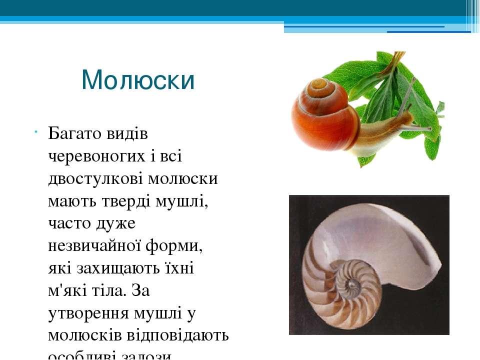 Молюски Багато видів черевоногих і всі двостулкові молюски мають тверді мушлі...