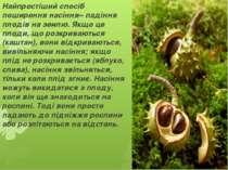 Найпростіший спосіб поширення насіння– падіння плодів на землю. Якщо це плоди...