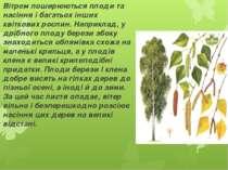 Вітром поширюються плоди та насіння і багатьох інших квіткових рослин. Наприк...