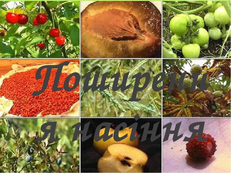 Поширення насіння