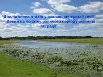 Дослідження птахів у заплаві середньої течії Десни на початку раннього період...