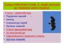 Серед побачених птахів 5 видів занесені до Червоної книги України: Статус - р...