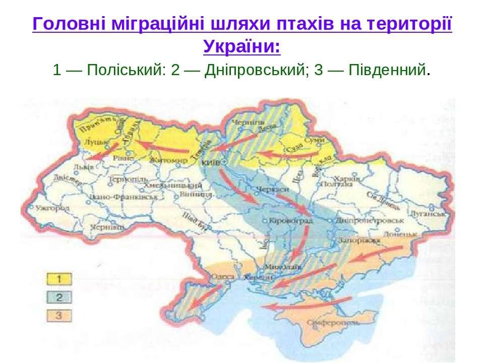Головні міграційні шляхи птахів на території України: 1 — Поліський: 2 — Дніп...