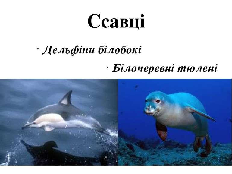 Ссавці Дельфіни білобокі Білочеревні тюлені