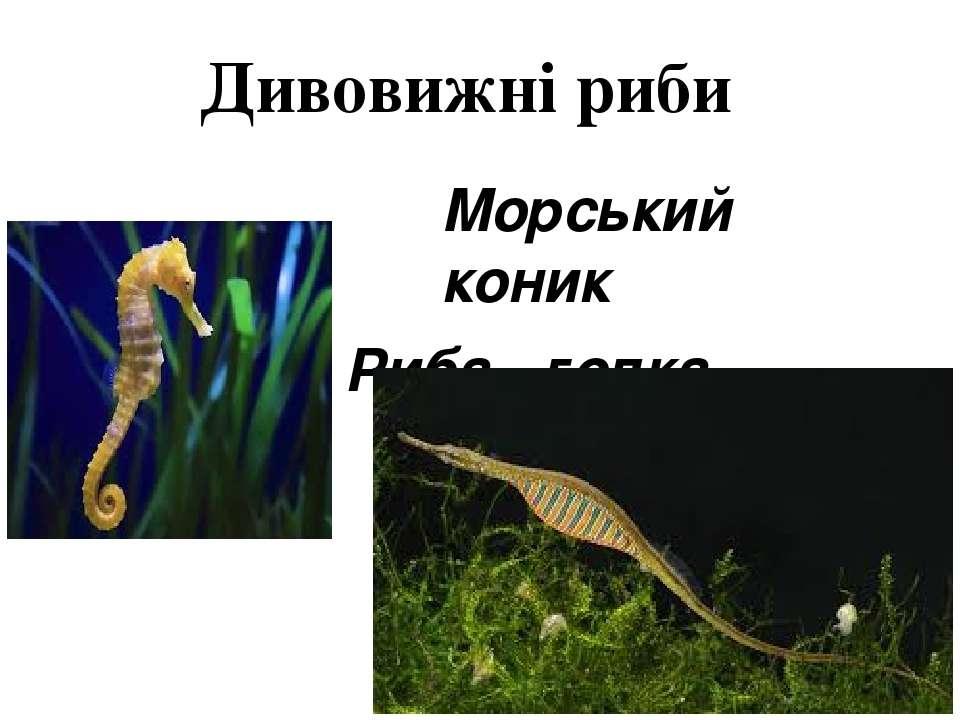 Дивовижні риби Морський коник Риба - голка