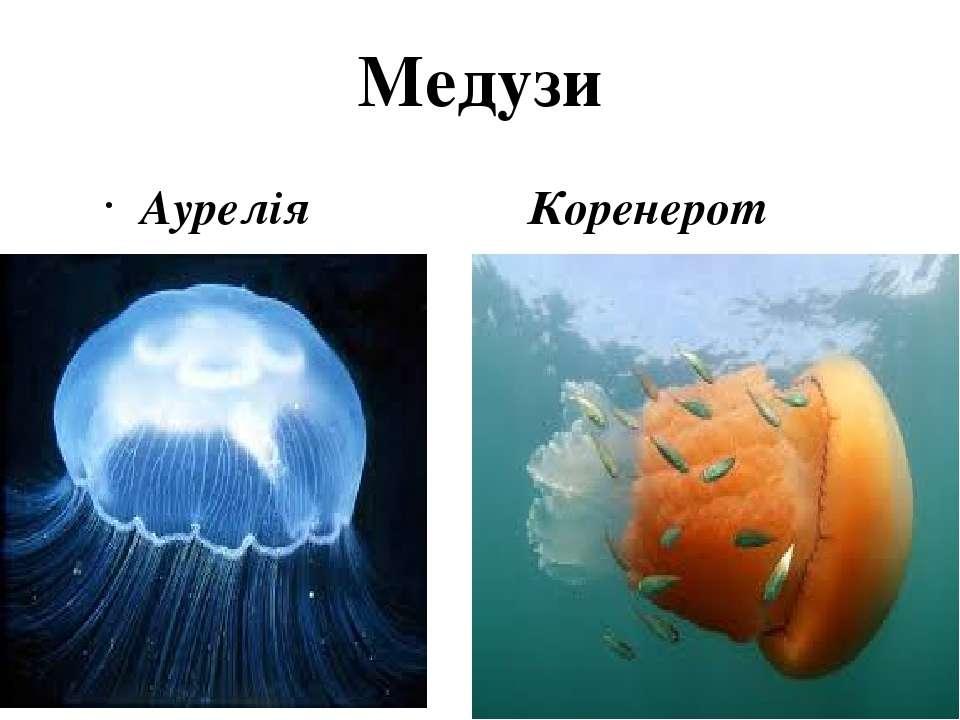 Медузи Аурелія Коренерот
