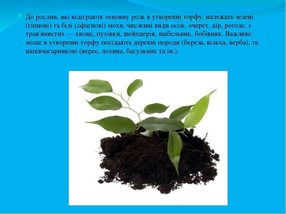 До рослин, які відіграють основну роль в утворенні торфу, належать зелені (гі...