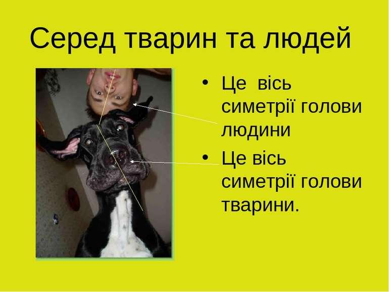 Серед тварин та людей Це вісь симетрії голови людини Це вісь симетрії голови ...