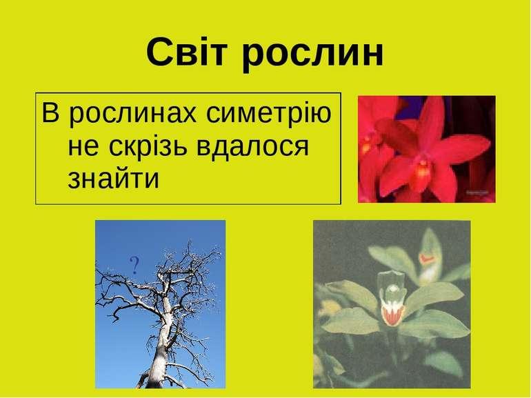 Світ рослин ? В рослинах симетрію не скрізь вдалося знайти