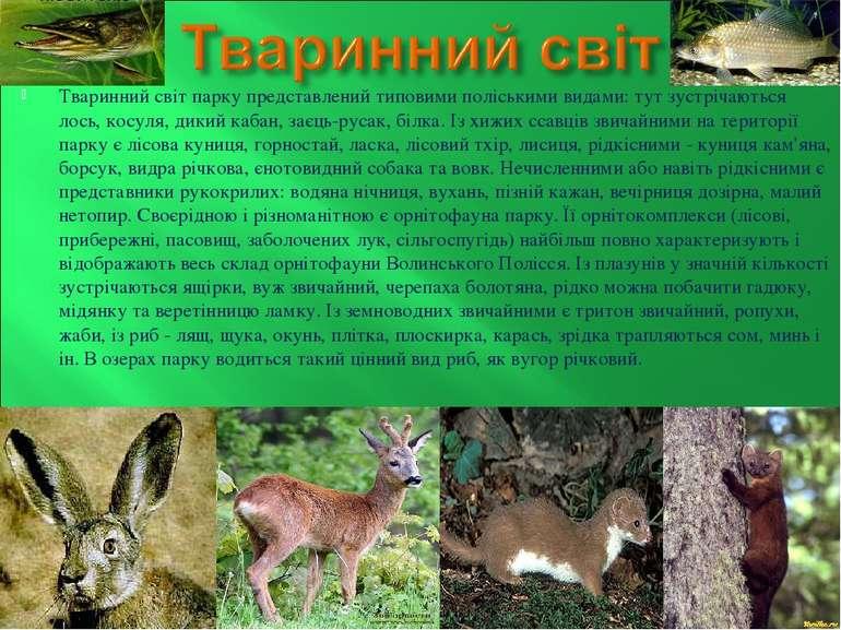 Тваринний світ парку представлений типовими поліськими видами: тут зустрічают...