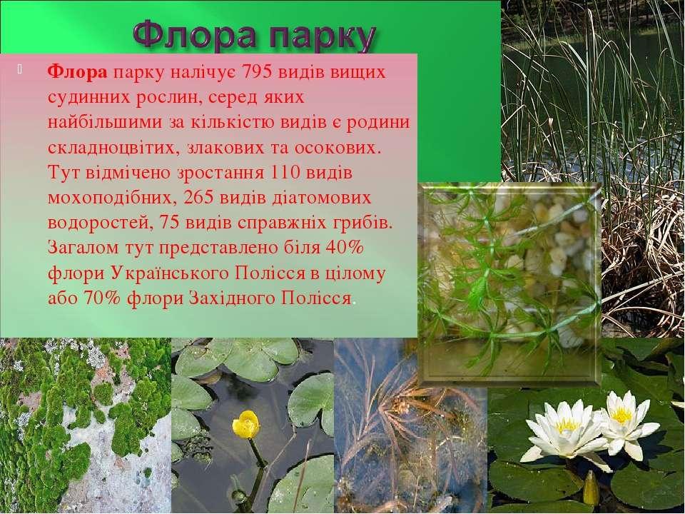 Флора парку налічує 795 видів вищих судинних рослин, серед яких найбільшими з...