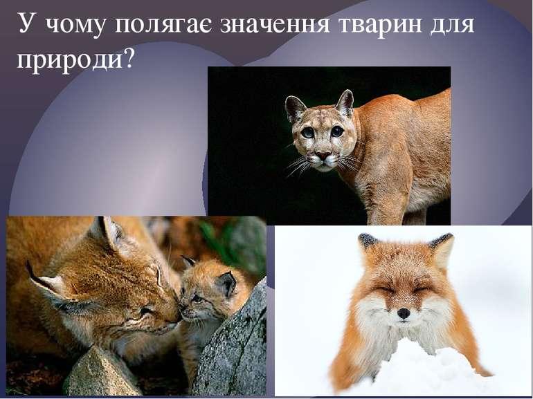 У чому полягає значення тварин для природи?