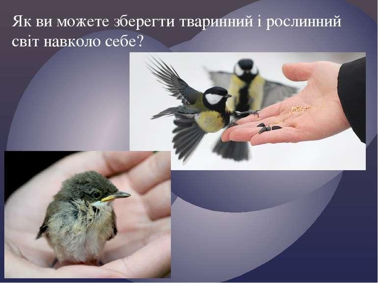 Як ви можете зберегти тваринний і рослинний світ навколо себе?