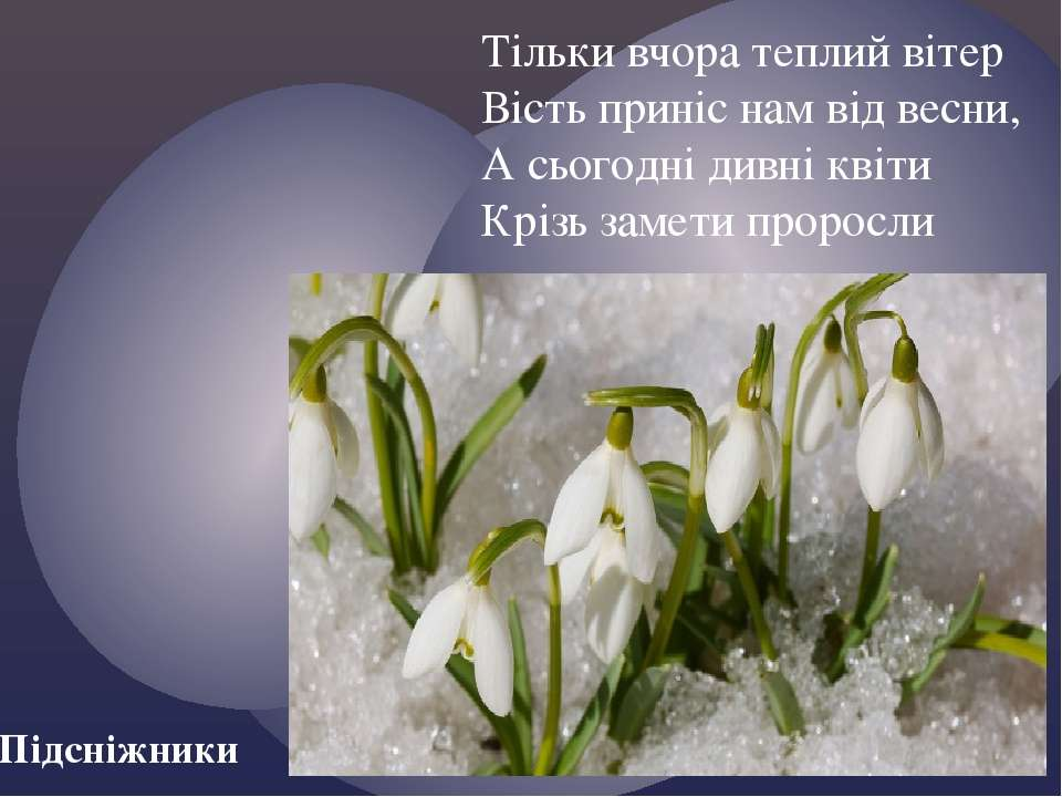 Тільки вчора теплий вітер Вість приніс нам від весни, А сьогодні дивні квіти ...