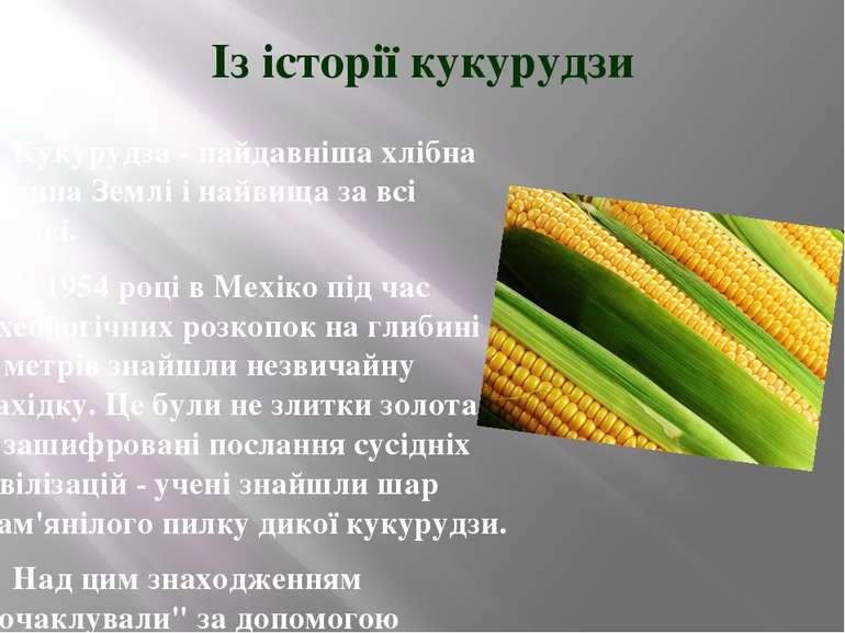 Із історії кукурудзи Кукурудза - найдавніша хлібна рослина Землі і найвища за...