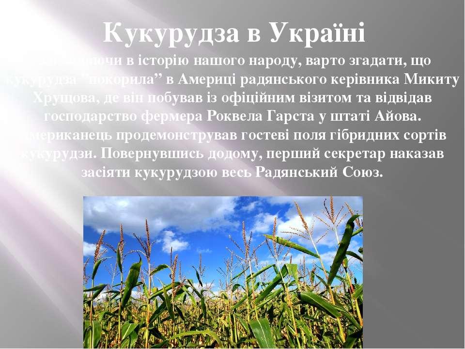 """Заглядаючи в історію нашого народу, варто згадати, що кукурудза """"покорила"""" в ..."""