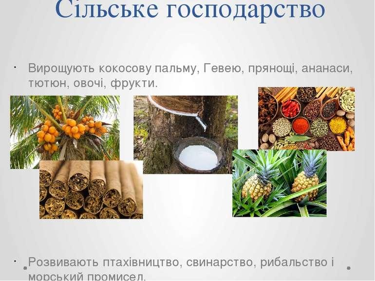 Сільське господарство Вирощують кокосову пальму, Гевею, прянощі, ананаси, тют...
