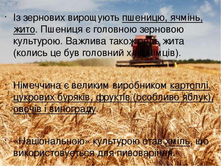 Із зернових вирощують пшеницю, ячмінь, жито. Пшениця є головною зерновою куль...