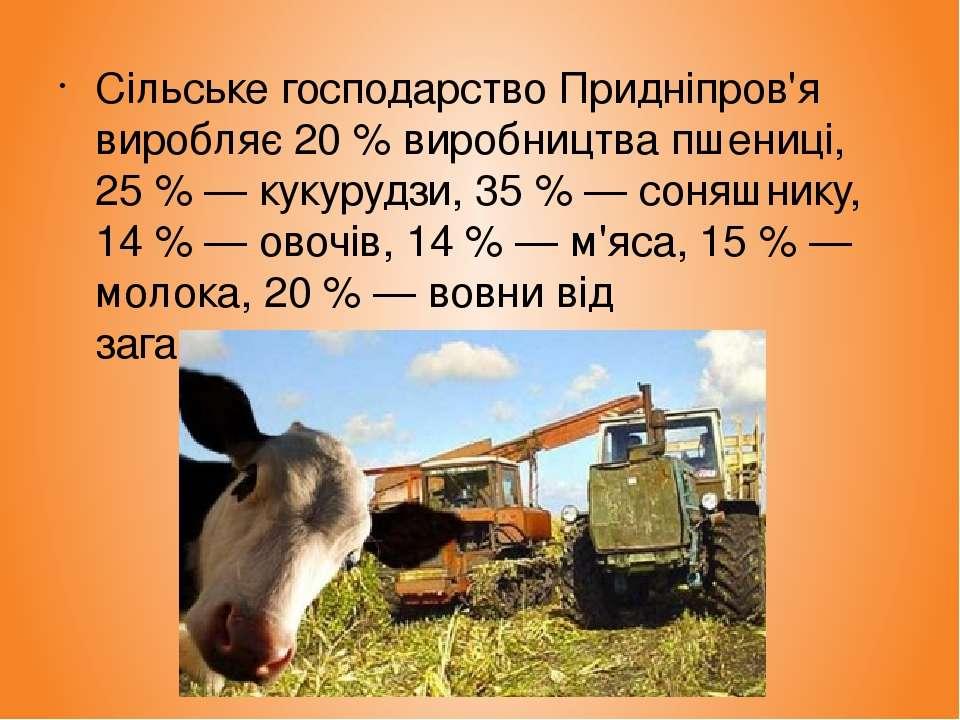 Сільське господарство Придніпров'я виробляє 20 % виробництва пшениці, 25 % — ...