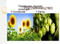 Рослинництво Соняшник Хміль Переважно зернові культури