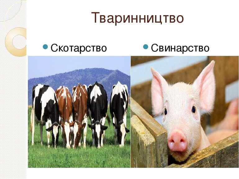 Тваринництво Скотарство Свинарство