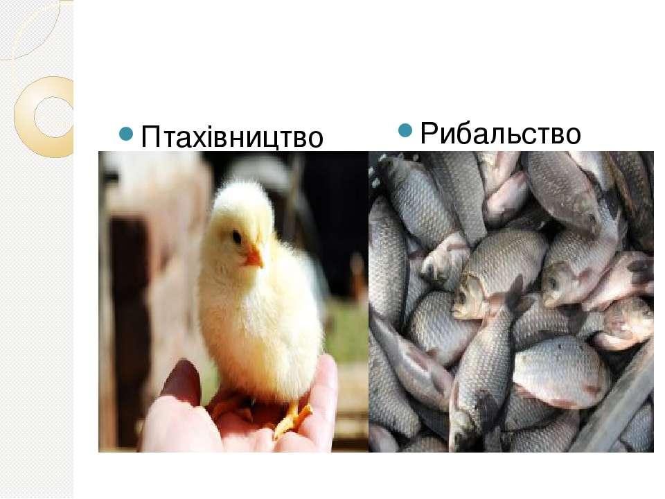 Птахівництво Рибальство