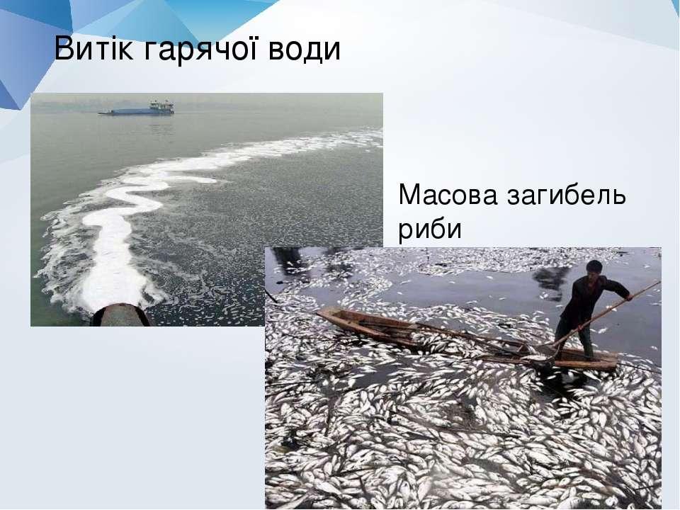 Витік гарячої води Масова загибель риби