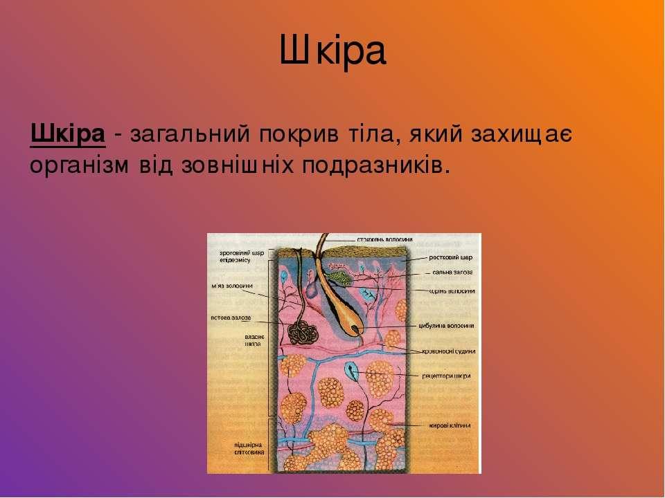 Шкіра - загальний покрив тіла, який захищає організм від зовнішніх подразникі...