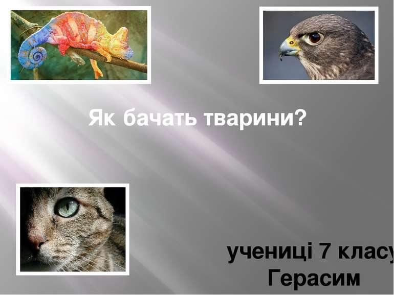 Як бачать тварини? учениці 7 класу Герасим Христини