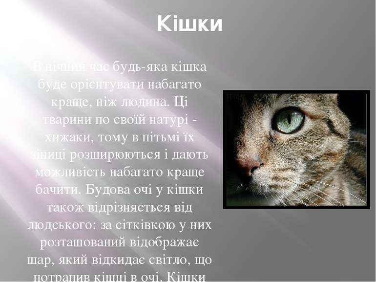 Кішки В нічний час будь-яка кішка буде орієнтувати набагато краще, ніж людина...
