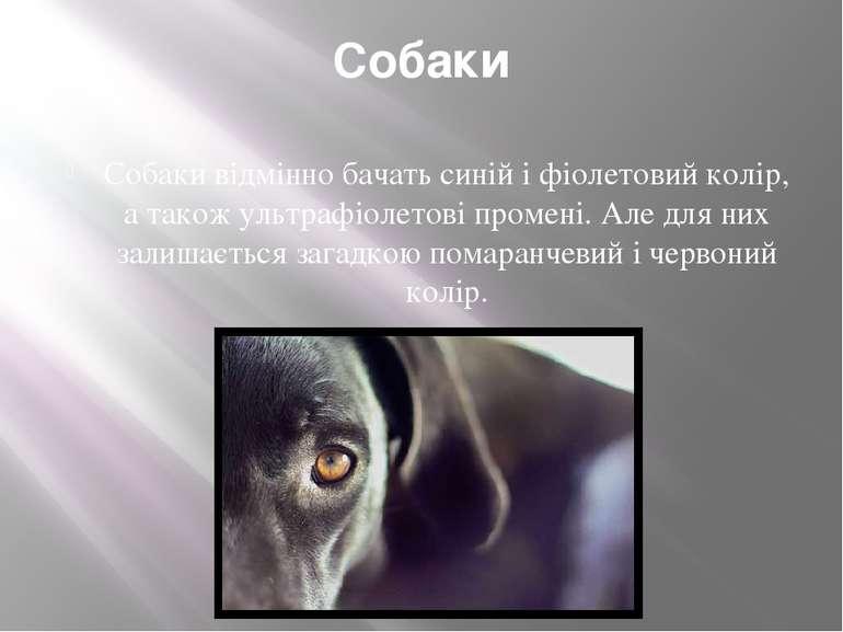 Собаки Собаки відмінно бачать синій і фіолетовий колір, а також ультрафіолето...