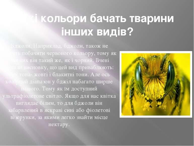 Які кольори бачать тварини інших видів? Бджоли. Наприклад, бджоли, також не м...