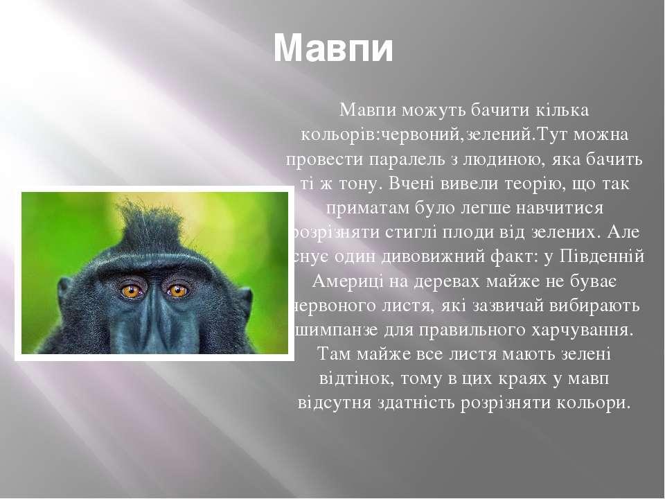 Мавпи Мавпи можуть бачити кілька кольорів:червоний,зелений.Тут можна провести...