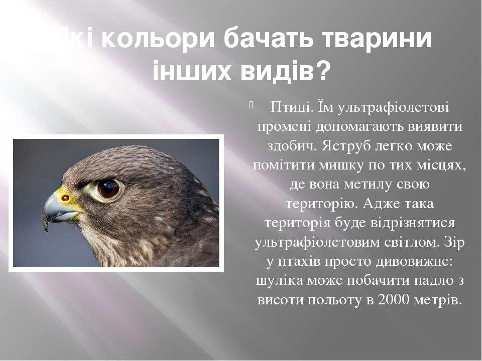 Які кольори бачать тварини інших видів? Птиці. Їм ультрафіолетові промені доп...