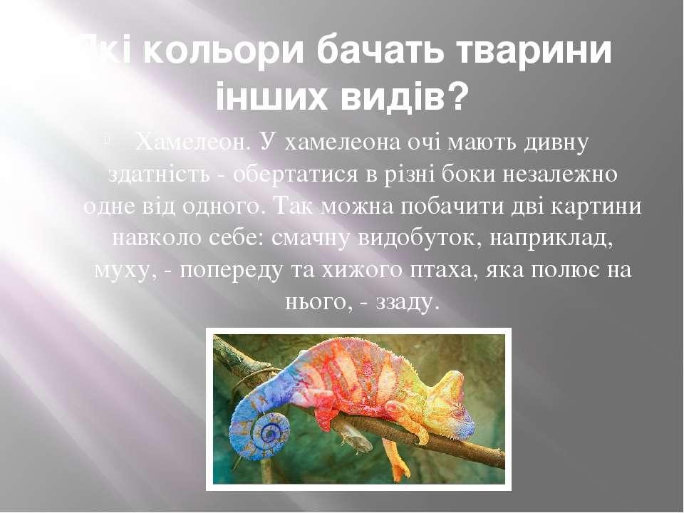 Які кольори бачать тварини інших видів? Хамелеон. У хамелеона очі мають дивну...