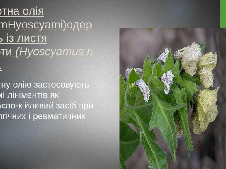 Блекотна олія (OleumHyoscyami)одержують із листя блекоти(HyoscyamusnigerL....