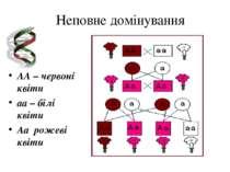 Неповне домінування AA – червоні квіти aa – білі квіти Aa рожеві квіти