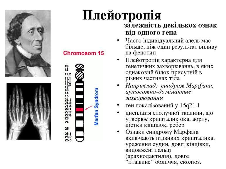 Плейотропія залежність декількох ознак від одного гена Часто індивідуальний а...