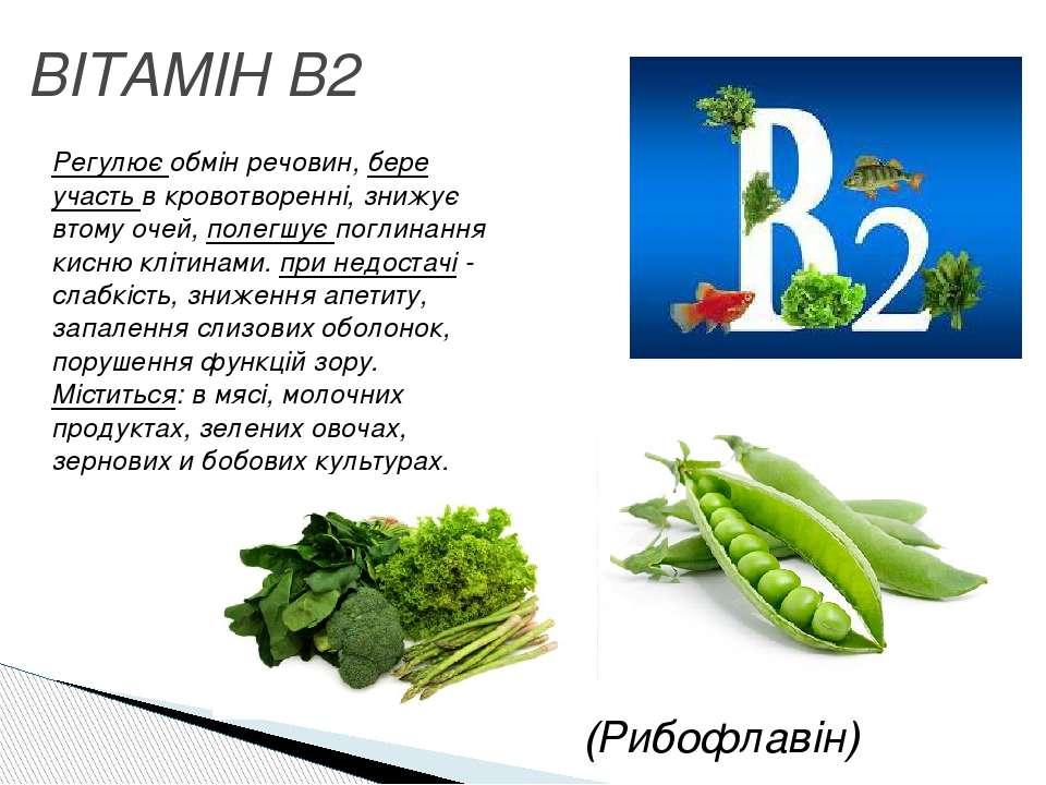ВІТАМІН B2 Регулює обмін речовин, бере участь в кровотворенні, знижує втому о...