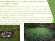 У болотному масиві виділяють два основних горизонти: верхній – активний (діял...
