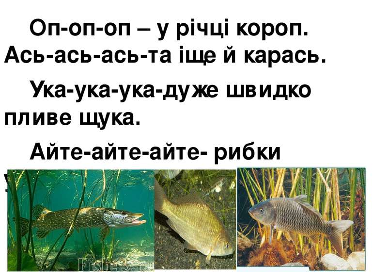 Оп-оп-оп – у річці короп. Ась-ась-ась-та іще й карась. Ука-ука-ука-дуже швидк...