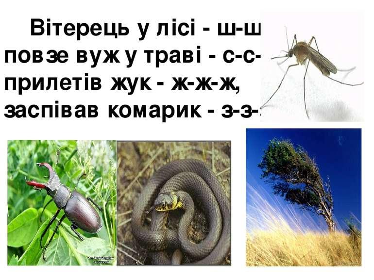 Вітерець у лісі - ш-ш-ш, повзе вуж у траві - с-с-с, прилетів жук - ж-ж-ж, ...
