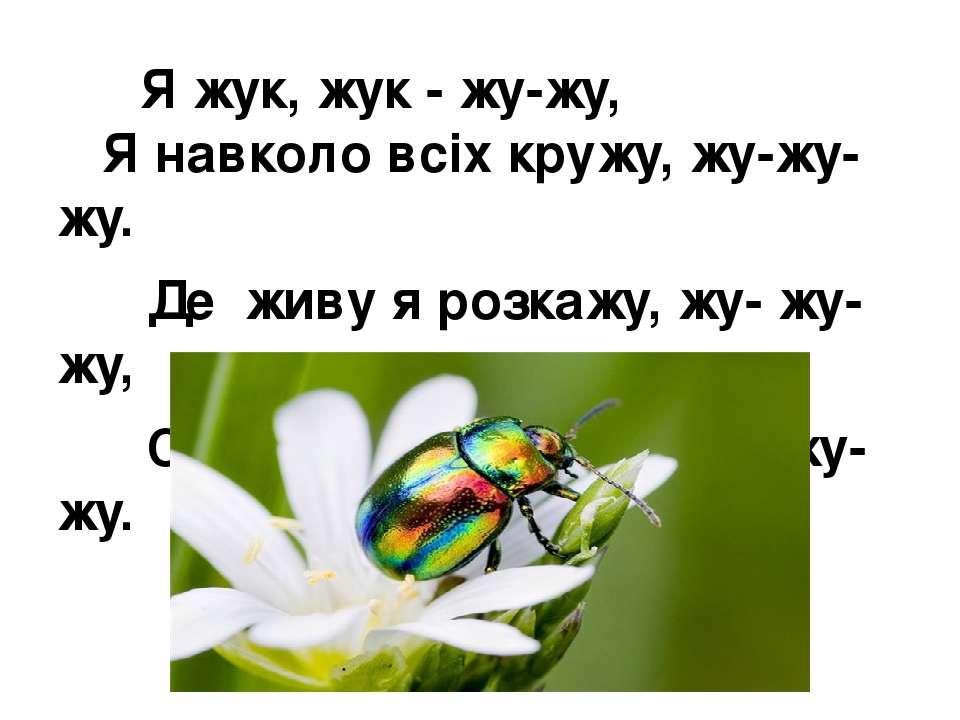 Я жук, жук - жу-жу, Я навколо всіх кружу, жу-жу-жу. Де живу я розкажу, жу- ...